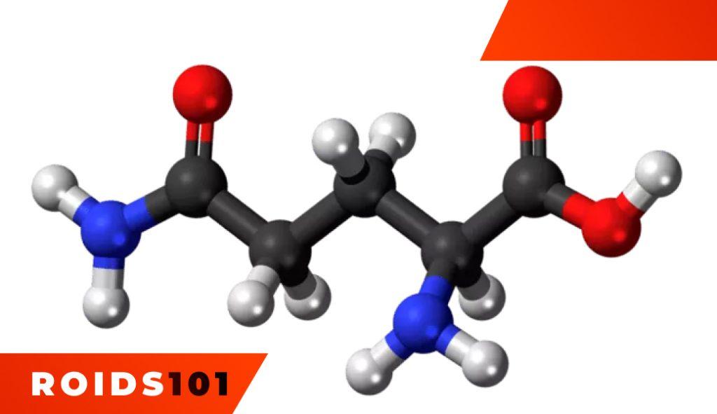 glutamine-usage-different-forms-dosage-3